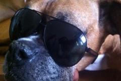 poker sunglasses